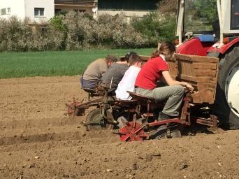 Hoch auf dem Kartoffelwagen